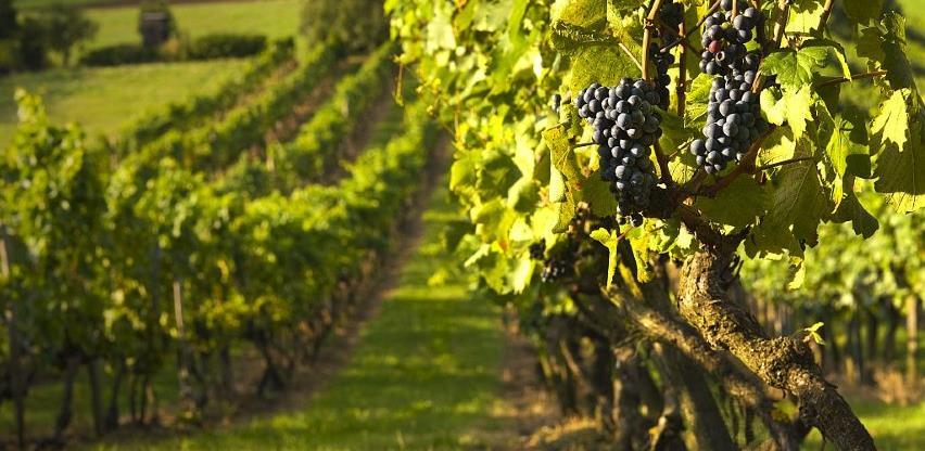 Potkozarska 'Toskana' ponosna na kvalitetna vina