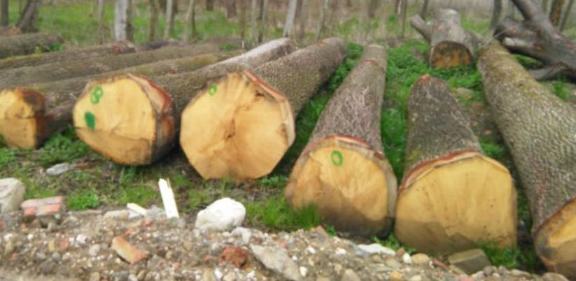 Poslodavci traže doneošenje Zakon o šumama FBiH i zabranu izvoza trupaca