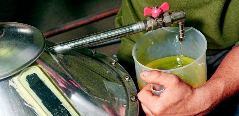 Oko 2.500 litara ulja od smilja još čeka kupce