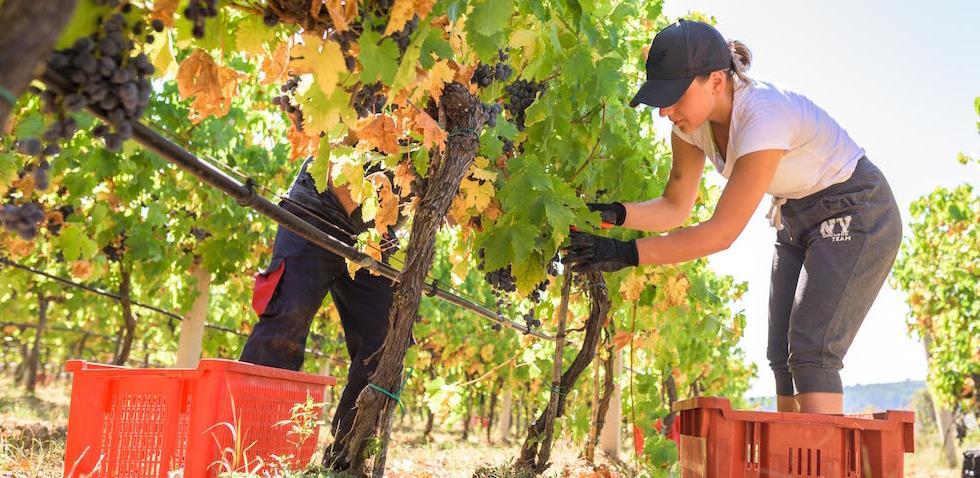 Sa novim investicijama po nove zlatne medalje: EU pomaže modernizaciju vinarstva