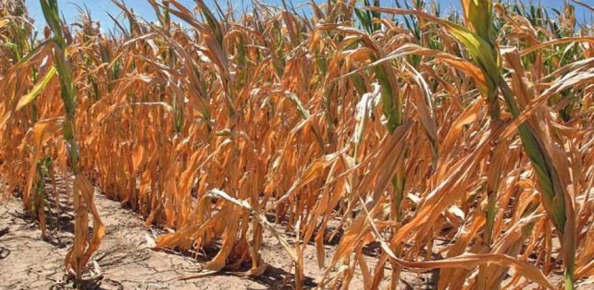 Zbog posljedica suše i rasta cijena stočne hrane: Ljudi masovno zatvaraju farme