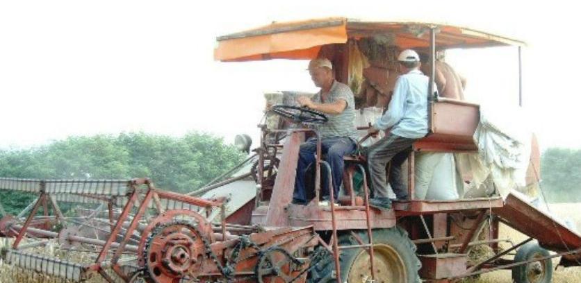 Rekordni prinosi pšenice i ječma
