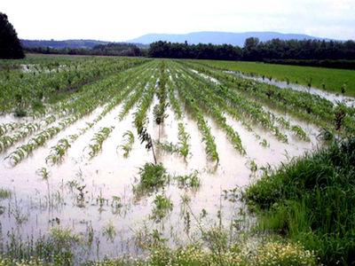 U toku sanacija poplavljenog poljoprivrednog zemljišta u FBiH