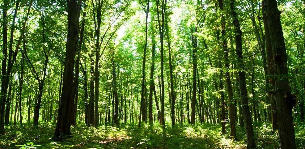 Objavljen javni poziv za dodjelu 2,5 miliona KM za projekte u oblasti šumarstva