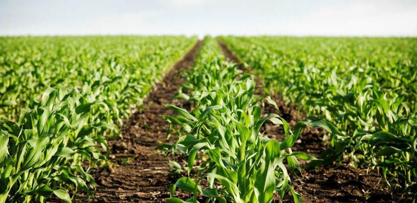 Utvrđene izmjene Zakona o novčanim podrškama u poljoprivredi TK