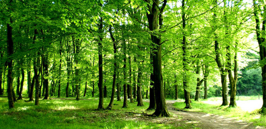 Podržano ukidanje nameta privrednicima za opštekorisne funkcije šuma