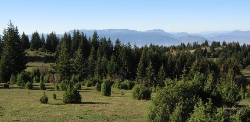 Povećanje proizvodnje i prodaje šumskih sortimenata u FBiH