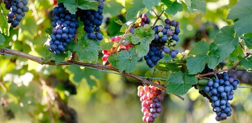 Francuska povećala pomoć vinskom sektoru na 250 miliona eura