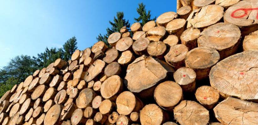 Drvoprerađivači sa Sokoca dali rok od tri dana za ispunjenje zahtjeva