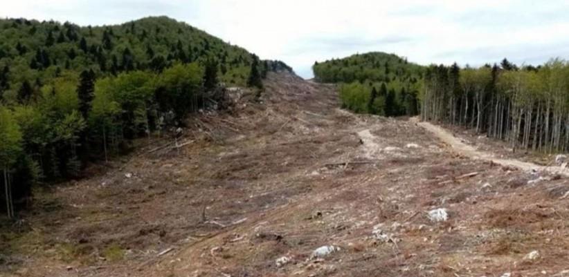 Dok BiH čeka odgovor Hrvatske, šuma na Plješevici nestaje