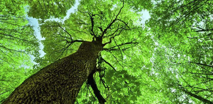 Uspostavlja se informacioni sistem za šume i šumarstvo Federacije BiH