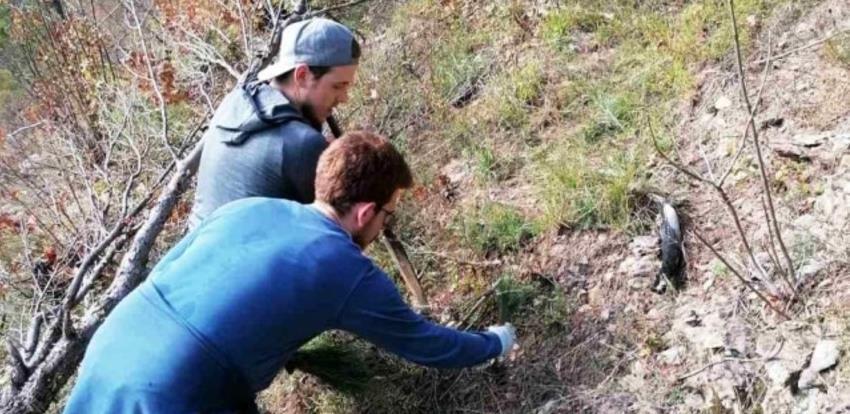 Očuvanje prirode u Jablanici: Posađeno 500 sadnica crnog bora i 125 smrče