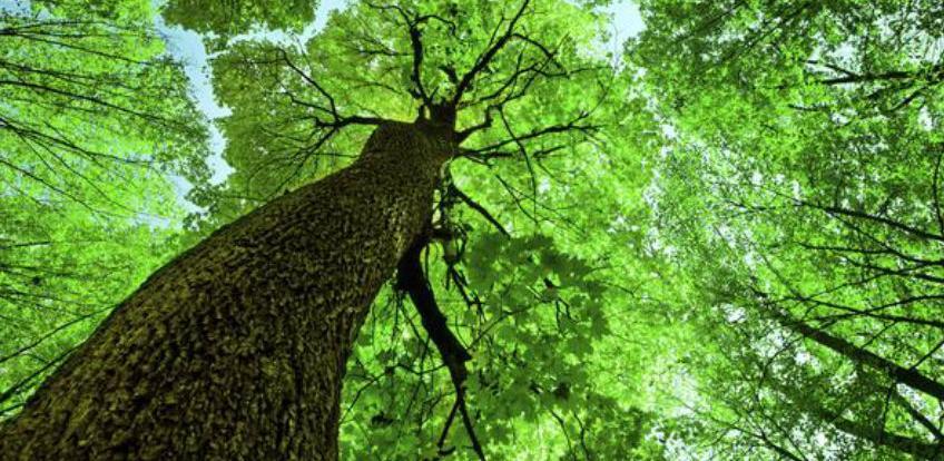 Uskoro u funkciji prva laboratorija za ispitivanje štetnika u bh. šumama