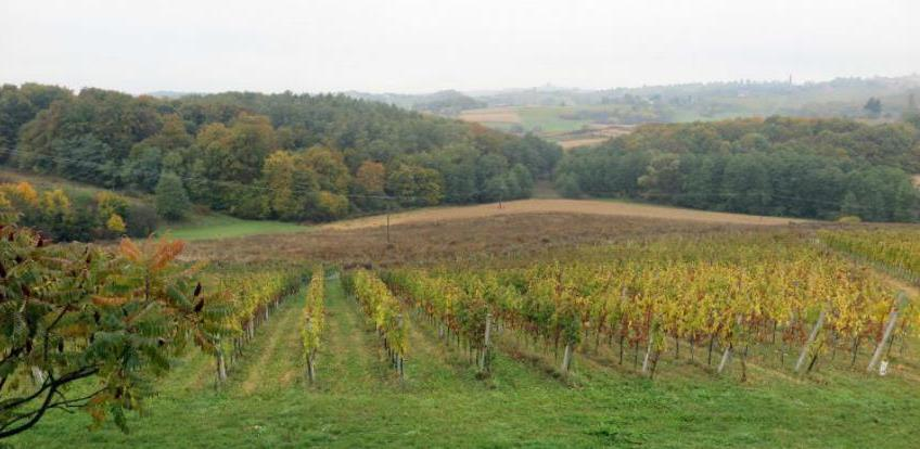 Pravilnik načinu vođenja vinogradarskog registra i vinarskog registra