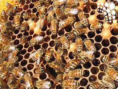 Seminar o jačanju saradnje između pčelara i voćara