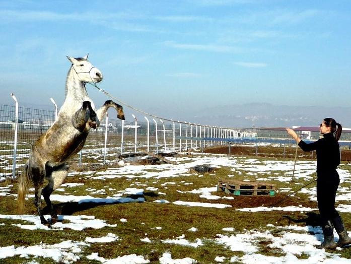 Pegasos: Obuka konja Natural Horsmenship metodom