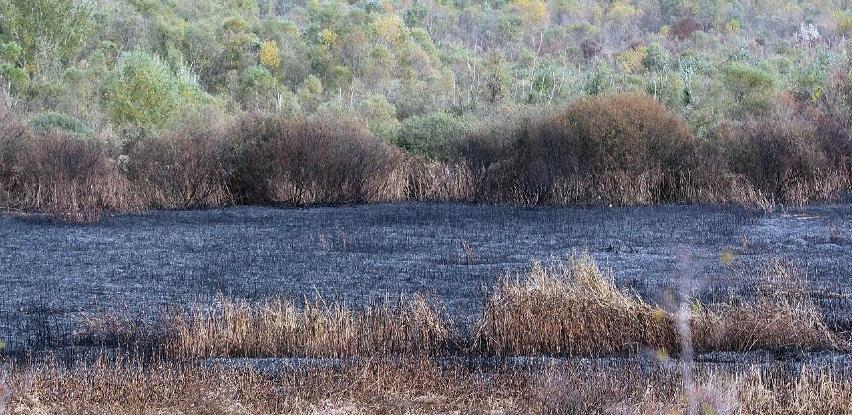 Izgorjelo oko 10 hektara Hutova blata, požar vjerovatno podmetnut