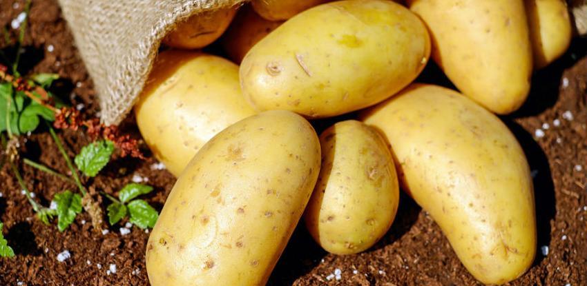 Krompir siguran za izvoz iz BiH i plasman u našoj zemlji