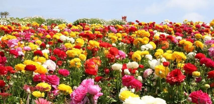 Husić: Pandemija nije smanjila interes građana za cvijećem