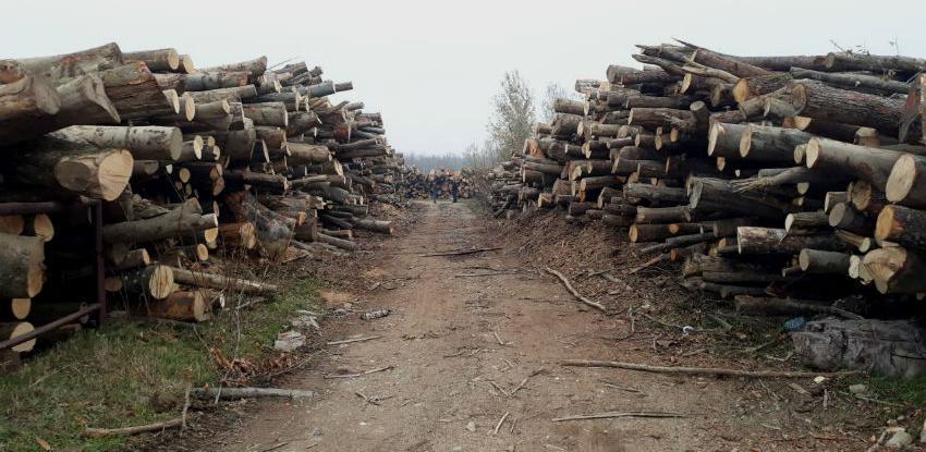 Inspekcija oduzela oko 780 m³ šumskih drvnih sortimenata