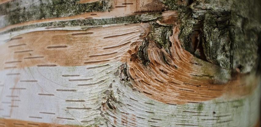 Pad proizvodnje i prodaje u šumarstvu za 75 posto