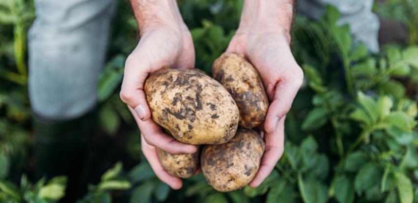 Svaki peti krompir u Evropskoj uniji proizveden je u Njemačkoj