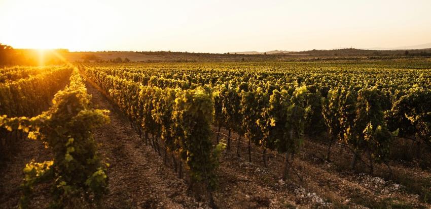 Bosanskohercegovački vinari mogu očekivati zaštitu