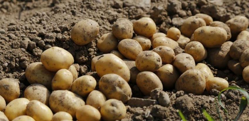 Krompir iz BiH u EU