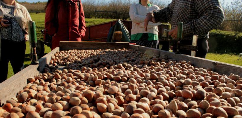 Podizanje nasada jagode i lješnjaka u sklopu projekta LIR u Općini Žepče