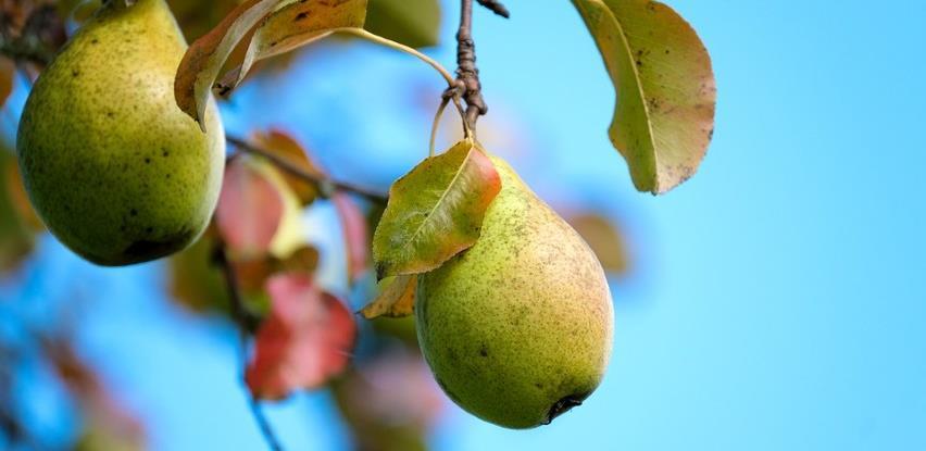 Cijene voća obaraju rekord