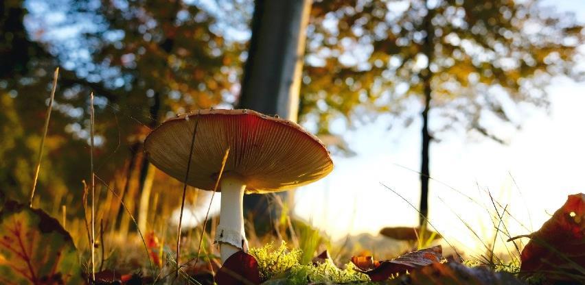 Zubić: Berači gljiva neće biti oštećeni