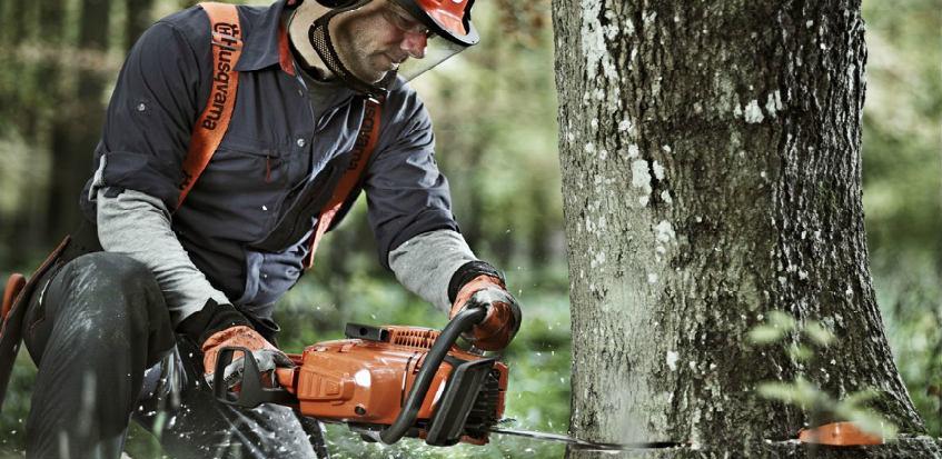 6 koraka do uspiješnog obaranja stabala