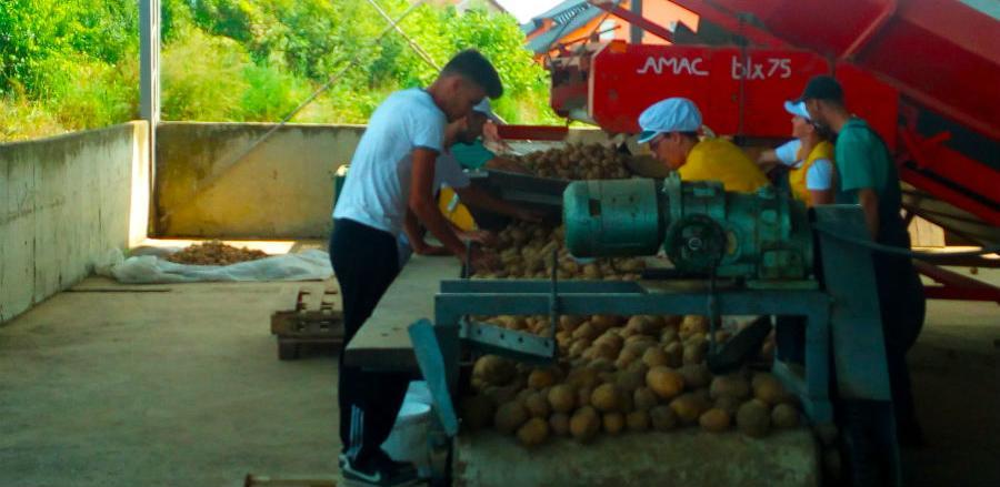 """""""Semberka"""" počela s otkupom prvih količina krompira ipovrća"""