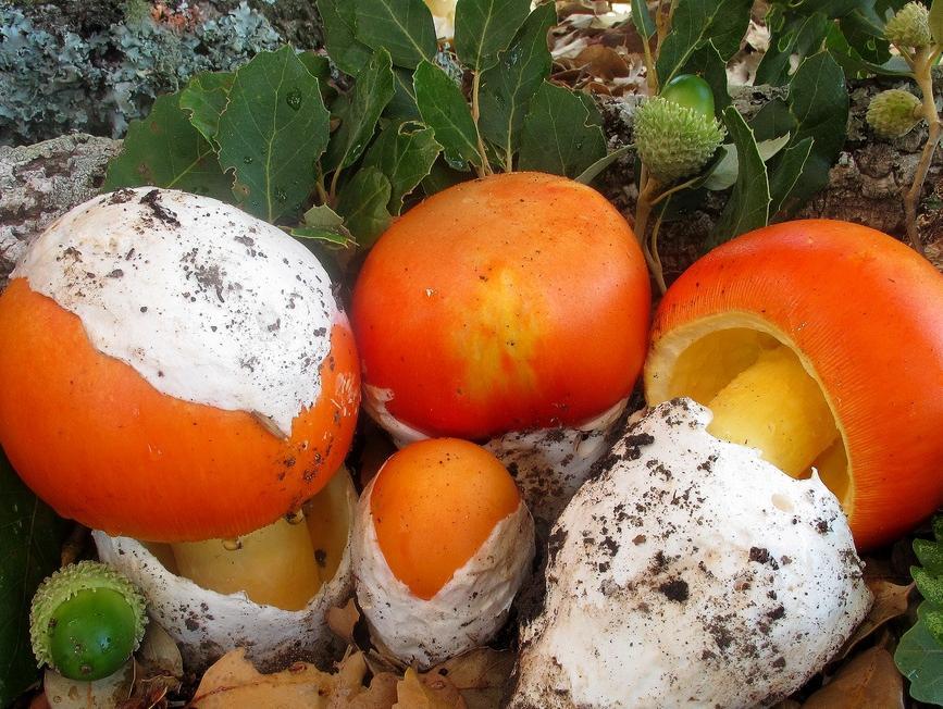 Prerada gljiva u hladnjači bugojanskog preduzeća Heko