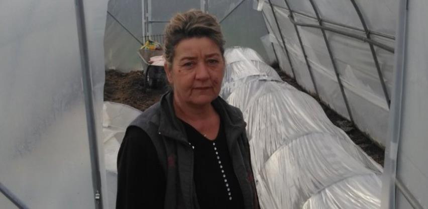 Porodica iz Kalesije uzgojila 5 tona krastavaca kornišona