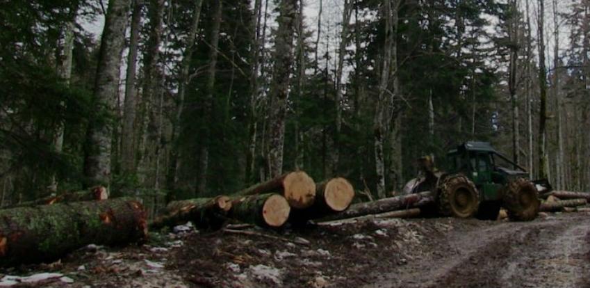 Proizvodnja šumskih sortimenata u drugom kvartalu manja za 16,5 posto