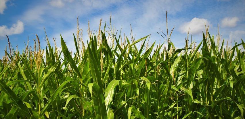 Pandemija pogodila i poljoprivrednike