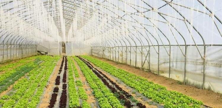 Kanton Sarajevo bilježi povećanje interesa za poljoprivrednu proizvodnju