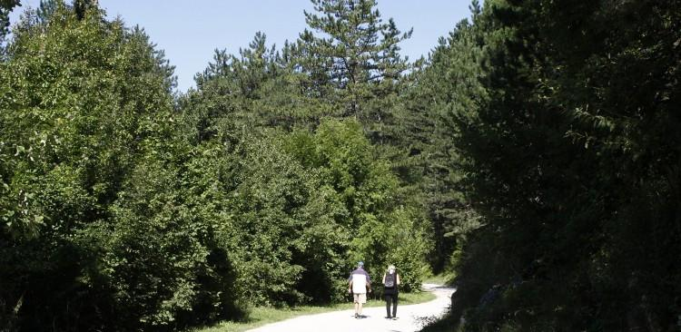 U Federaciji BiH u toku konsultacije o novom zakonu o šumama