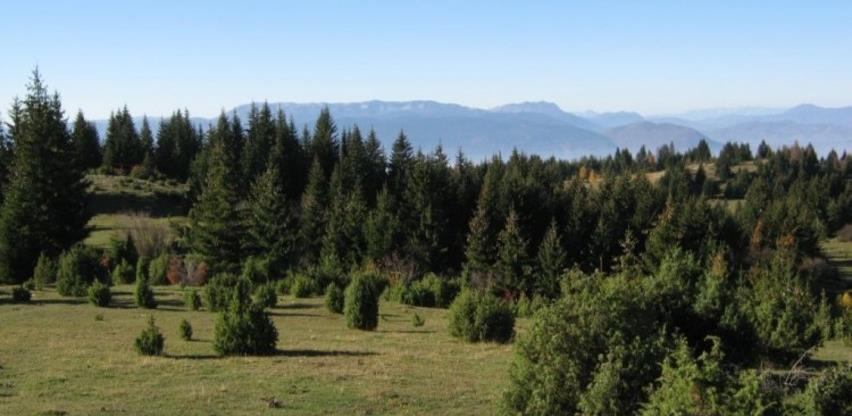 Pravilnik o uvjetima i načinu zamjene šuma i šumskog zemljišta u svojini Republike Srpske