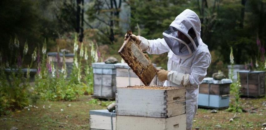 Hercegovački pčelari spremni za izvoz: Za kilogram pčelinjeg otrova 20.000 eura