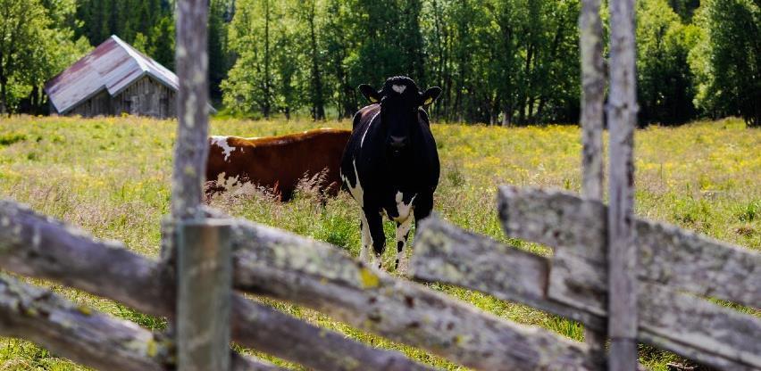 Zakon o izmjenama i dopunama Zakona o stočarstvu