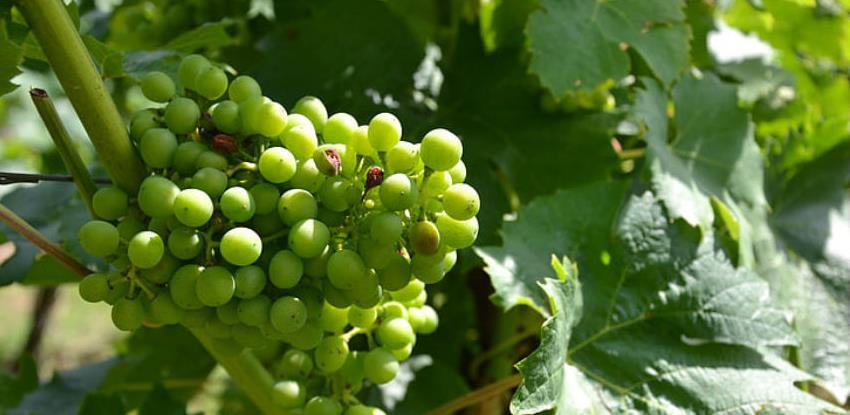 Poziv za kapitalne investicije: Vinogradarstvo je značajno za RS