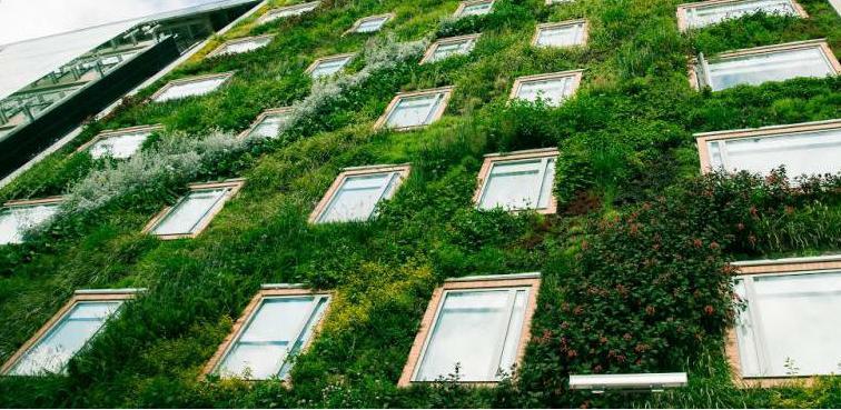 Malo firmi u BiH spremnih da rade zelenu fasadu u Sarajevu
