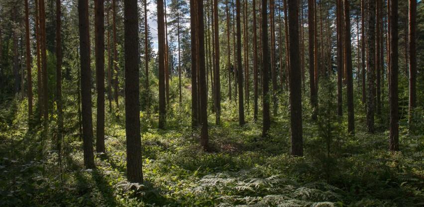 """""""Hercegbosanske šume"""" za pošumljavanje u 2020. utrošile 506 tisuća KM"""