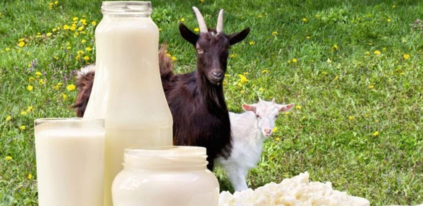Povećana žeđ za kozjom surutkom, a malo je proizvođača