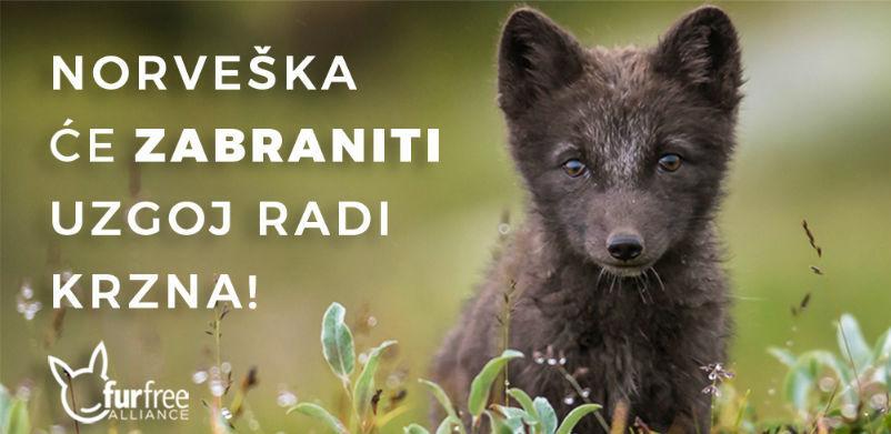 I Norveška će zabraniti uzgoj životinja radi krzna