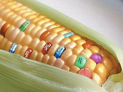 EBRD zaustavio širenje Monsantovih GMO proizvoda