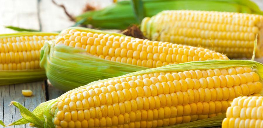 Studen Global SEE želi kupiti HPK-hemijska prerada kukuruza Draksenić