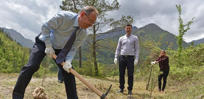 U Jablanici posađeno hiljadu sadnica crnog bora